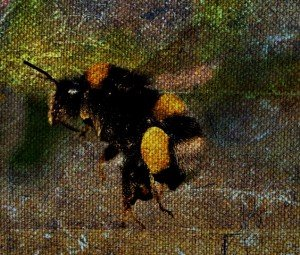 Thomas Jackson - Bitter Bees Hero